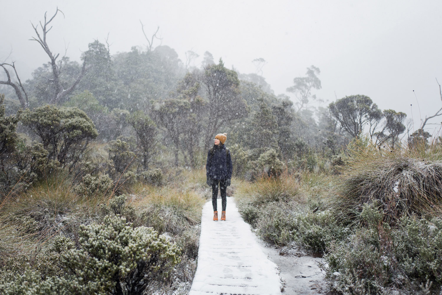 mellosweet-cradle-mountain-tasmania-1070489