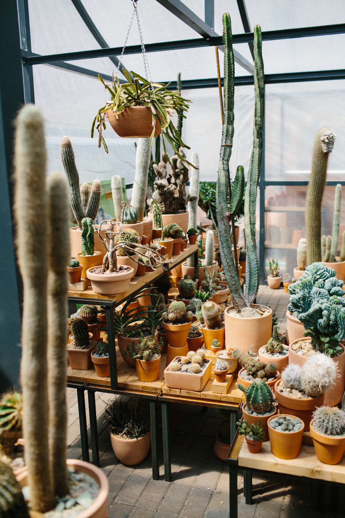 Cactus Pop-Up Shop in Chinatown